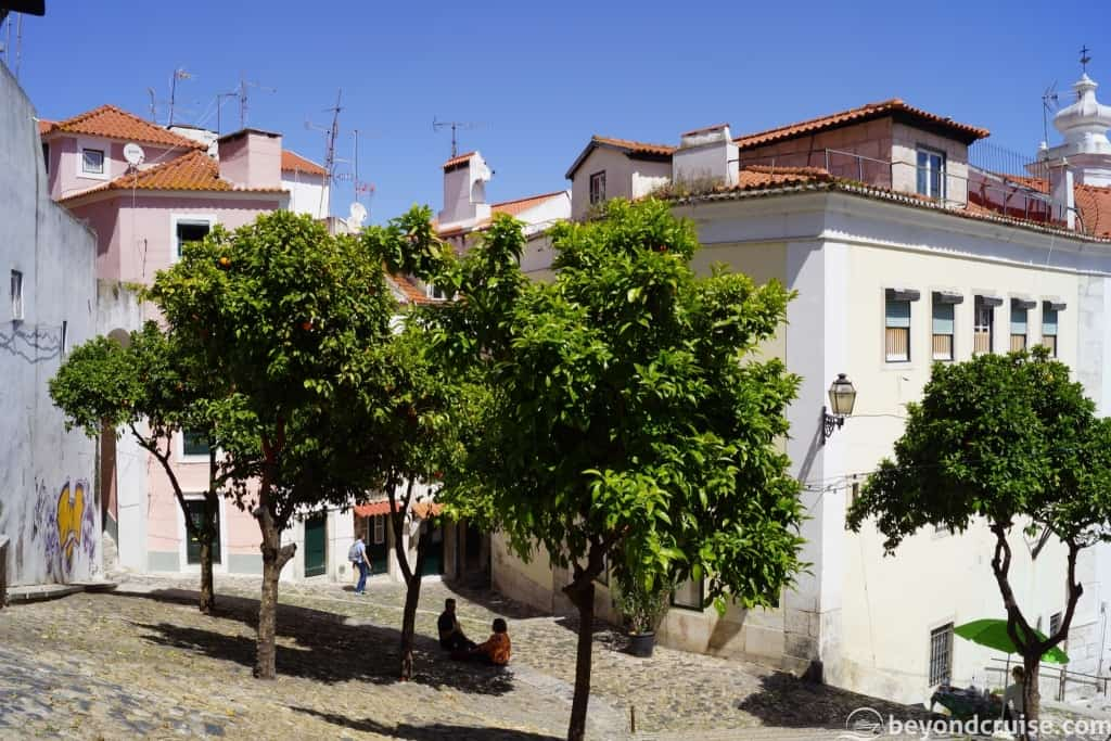 Orange Trees in Lisbon